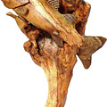 Sea Bass Sculpture by Eric Kempson