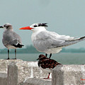 Sea Birds by Donna Brown