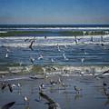 Sea Birds Feeding On Florida Coast Dsc00473_16 by Greg Kluempers