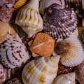 Sea Bones 19 by Robbie  Lyle