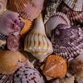 Sea Bones 20 by Robbie  Lyle