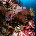 Sea Fans And Soft Coral, Fiji by Todd Winner