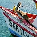 Sea Fly 1, Aruba by Monique Faella