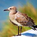 Sea Gull Of Boca Grande by Rich Leighton