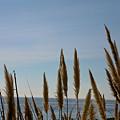 Sea Horse Tails by Liz Santie