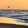 Sea It To Believe It by Judy Bugg Malinowski