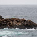 Sea Lion Hang Out - 2 by Christy Pooschke