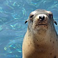Sea Lion Or Seal by Cheryl A Beaudoin