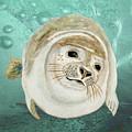 Sea Lion Swimming by Angeles M Pomata