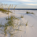 Sea Oats And Blue Sky by Bill Chambers