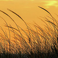 Sea Oats At Dusk by Cathy Kovarik