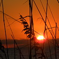 Sea Oats At Sunset by Terri Mills