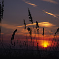 Sea Oats Blow In The Breeze As The Sun by Stacy Gold