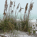 Sea Oats In Light Fog by Gene Norris