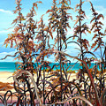Sea Oats by Karin  Dawn Kelshall- Best