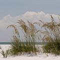 Sea Oats On A White Sandy Beach by Tina B Hamilton