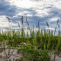 Sea Oats Sand Dune Sky by Nancy L Marshall