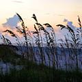 Sea Oats Silhouette by Kristin Elmquist