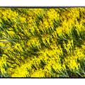 Sea Of Yellow by R Thomas Berner