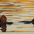 Sea Otter Laying Low In The Water by Max Allen