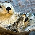Sea Otter Portrait by Jim Chamberlain