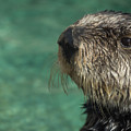 Sea Otter Stare Down by Em Witherspoon