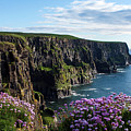Sea Pink On The Cliffs by Aidan Moran