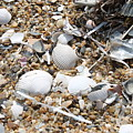 Sea Ribbons And Shells by Marcie Daniels