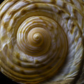Sea Shell Beauty by Garry Gay