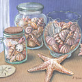 Sea Shell Collection by Joseph Schilling