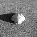 Sea Shell by Ferry Zievinger