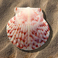 Sea Shell by Mike McGlothlen