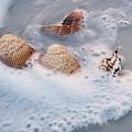 Sea Shells In A Wave Of Foam by Holly Eads