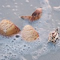Sea Shells In An Ocean Wave by Holly Eads
