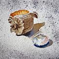 Sea Shells by Irina Sztukowski