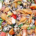 Sea Shells by Jim DeLillo