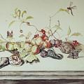Sea Shells by Joseph Valencia