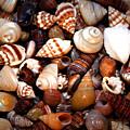 sea Shells by Tina Meador