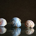 Sea Snails by Linda Sannuti