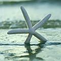 Sea Star Vert by Laura Fasulo
