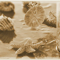 Sea Treasure -sepia by Luv Photography