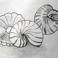 Sea Treasures by Janet Ledbetter-Eck