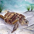 Sea Turtle 2 by Derek Mccrea