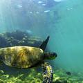Sea Turtle #5 by Anthony Jones