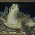 Sea Turtle by Jennifer Watson