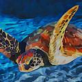 Sea Turtle by Sergey Lukashin
