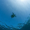 Sea Turtle Silhouette by Dave Fleetham - Printscapes