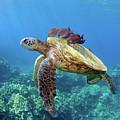 Sea Turtle Underwater by M.M. Sweet