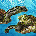 Sea Turtles by Cherie Taylor