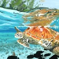 Sea Turtles by Chris Wiese